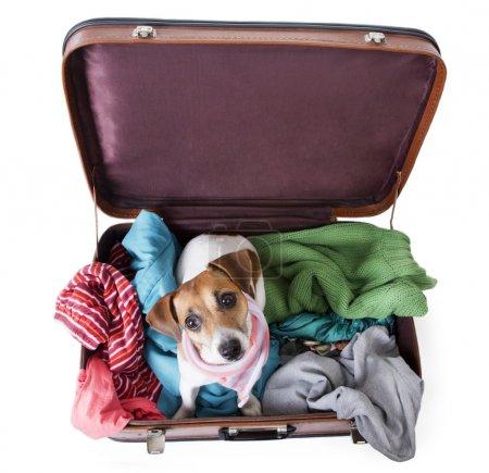 Lindo perro se sienta en una maleta