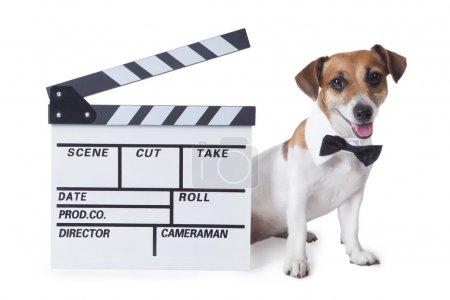 Pet movie star