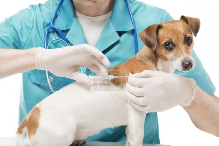 Vet and Dog with Microchip implant