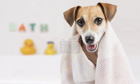 Clean pet