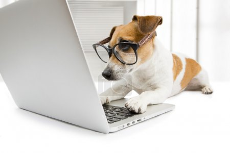 CLever dog with computer