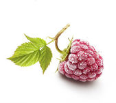 Raspberry branch isolated