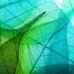 Macro leaves background texture...