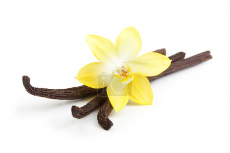 Vanilla pods and flower isolated