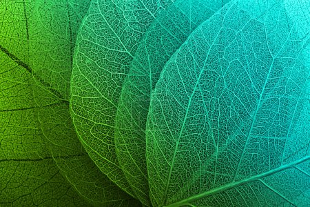 Photo for Macro leaves background texture - Royalty Free Image