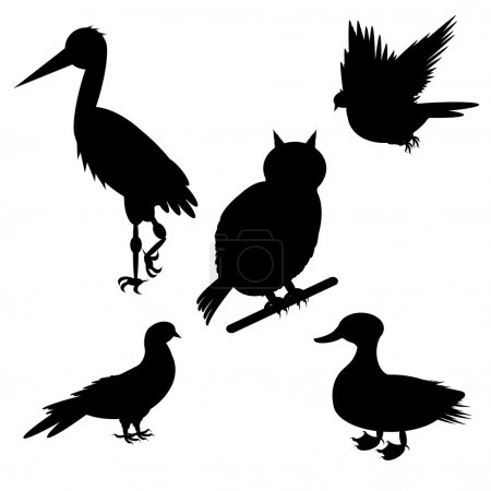 Monochrome silhouettes of different species of birds