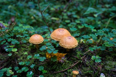 Nice mushrooms in the forest