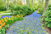 Blooming hyacinth flowers in a garden