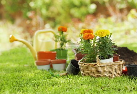 Photo for Garden tools and flowers in a basket - Royalty Free Image