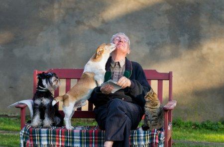 Photo pour Senior homme avec chiens et chat sur ses genoux sur banc - image libre de droit