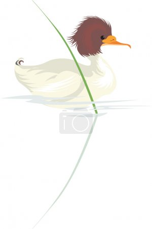 Illustration for Illustration of a duckling swimming in a pond - Royalty Free Image