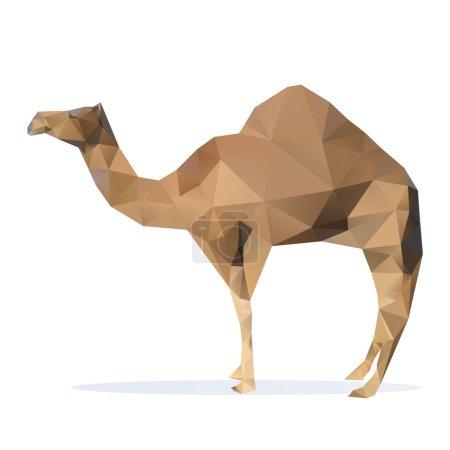 illustration of camel. Vector