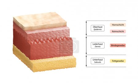 Layers Of Human Skin - German Labeling