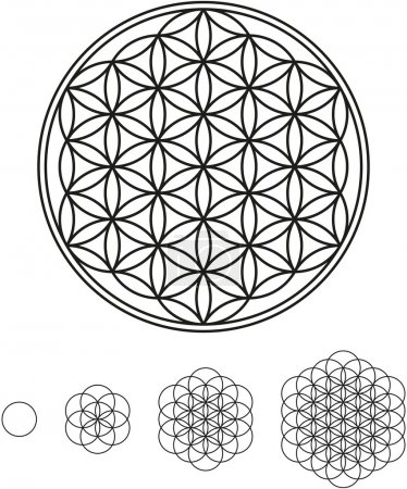 Illustration for Development of Flower of Life from a single circle to a complex symbol - Royalty Free Image