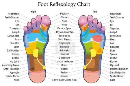Foot reflexology chart description