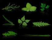 Various herbs - thyme basil parsley yarrow stinging nettle dandelion rocket and chives Isolated vector illustration on black background