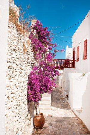 Photo pour Ruelle grecque traditionnelle sur l'île de Sifnos, Grèce - image libre de droit