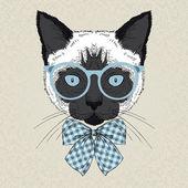 Portrét siamská kočka bederní