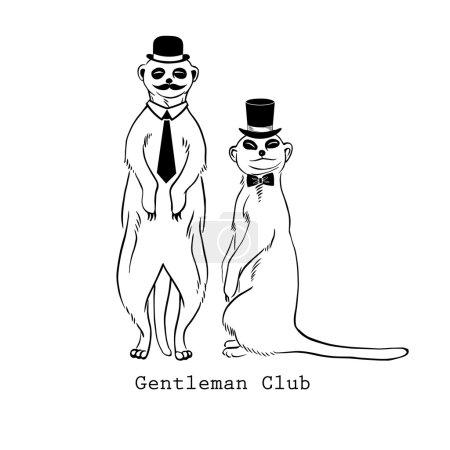 Meerkats gentlemen