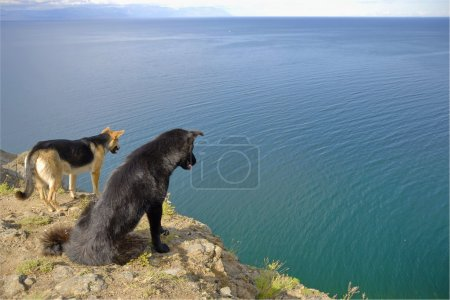 Two dogs look down from