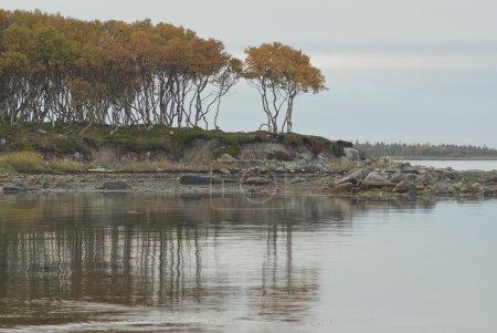 """Cape """"Dancing Birches"""" on Solovki Islands, Russia."""