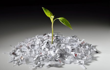 Plant growing from shredded paper
