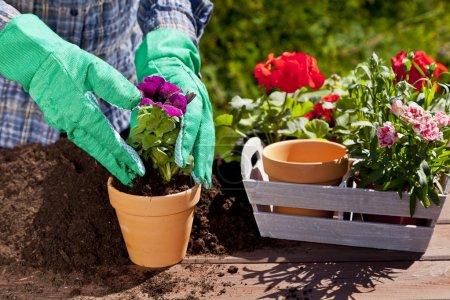 Photo pour Plantation de fleurs dans la maison de jardin - image libre de droit