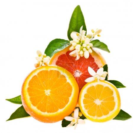 Photo pour Agrumes - oranges, pamplemousse et citron, coupé de la côté, décoré de fleurs et feuilles isolés sur fond blanc - image libre de droit
