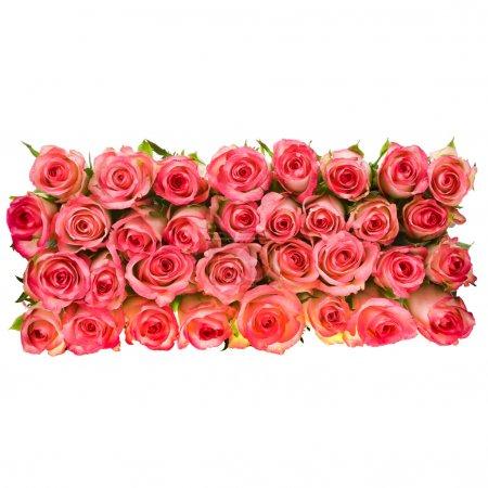 bouquet de roses roses isolé sur fond blanc