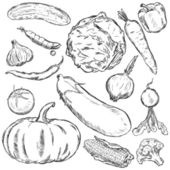 Vector set of sketch vegetables