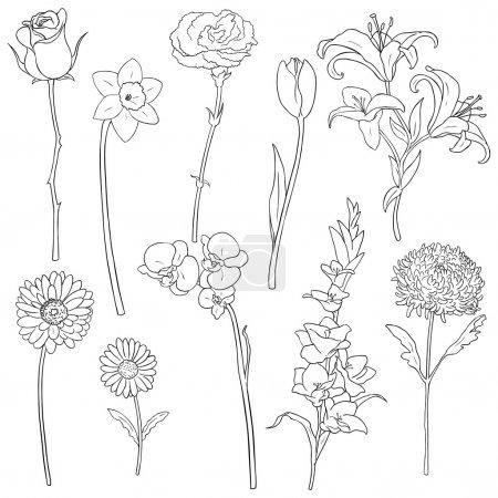 Illustration for Vector Set of Outline Flowers - Royalty Free Image