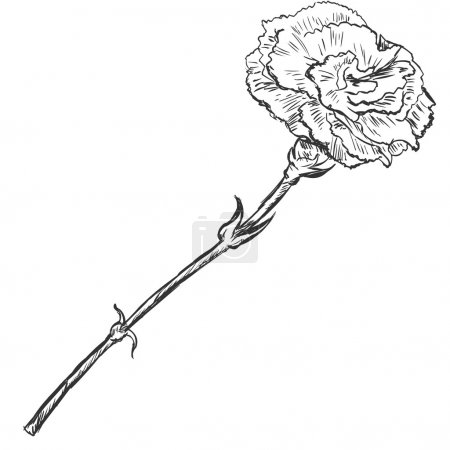 Vector Sketch Illustration - carnation