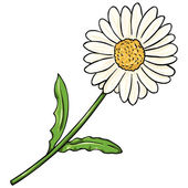 Vector Cartoon Isolated Illustration - Camomile