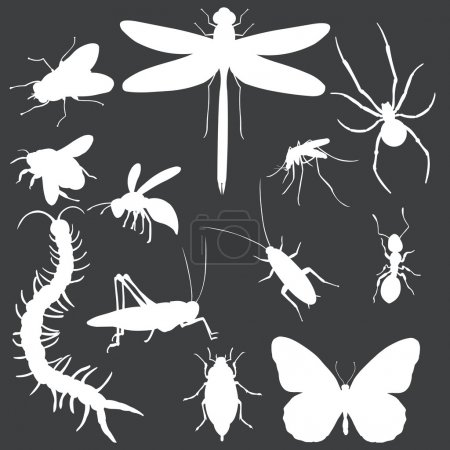 Vector Set of white Insects Silhouettes