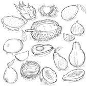 Vector Set of Sketch Exotic Fruits