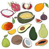 Vector Set of Cartoon Exotic Fruits