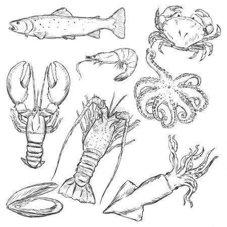 Sea Food Sketch