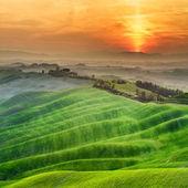Tuscan green spring at sunset, Italy