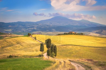 Summer afternoon walks on famous Tuscan road