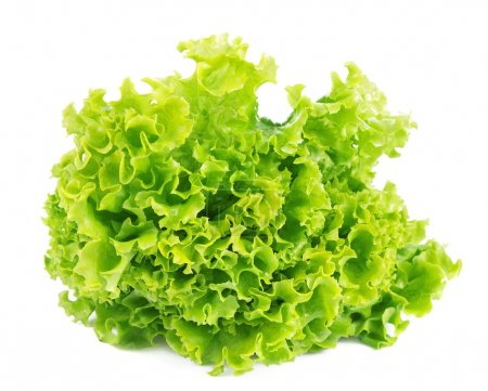 Photo for Lettuce isolated on white background - Royalty Free Image