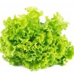 Lettuce isolated on white background...