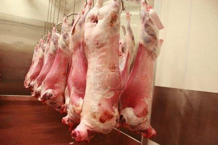 Lamb carcasses in an abattoir