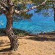 View to the sea through the trees in Sithonia, Cha...