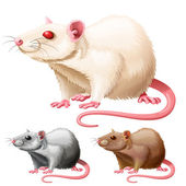 Vector illustration of three lab rats on white background