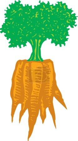Illustration pour Gravure sur bois Illustration d'une grappe de carottes - image libre de droit