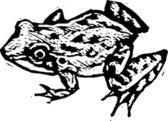 Woodcut illustration of Frog