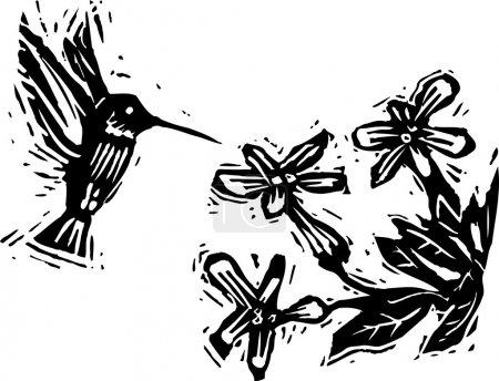 Holzschnitt-Illustration von Kolibris, die Blüten bestäuben
