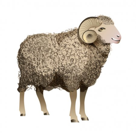 Illustration for Vector Realistic Sheep with detailed wool - Royalty Free Image