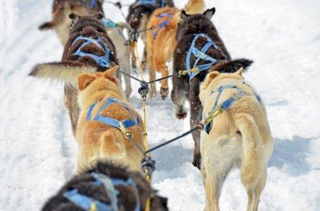 Dog sled close up