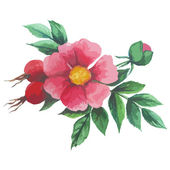 Watercolor seamless pattern with wild rose